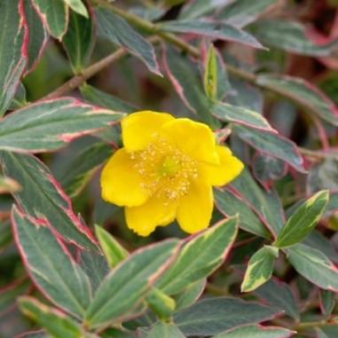 Design plantes couvre sol croissance rapide 52 angers plantes aquarium amazonien plantes for Comarbuste couvre sol croissance rapide